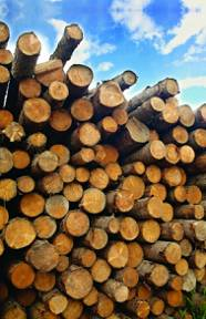 many-pine-logs-stacked-closeup-over-sky-with-clouds